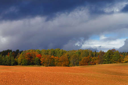 Bright autumn forest on the red plowed field edge under the dark cloudy sky