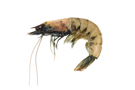 King tiger shrimp raw isolated on white Stock Photo - 15934686