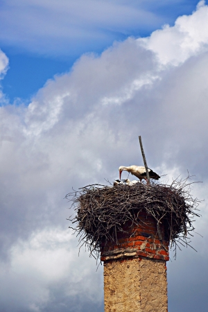 Stork in the nest on top of chimney is feeding her children Stock Photo