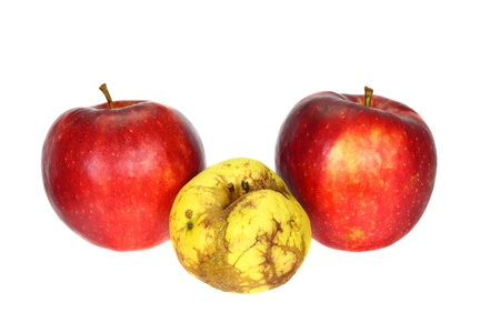 One ugly apple in front of two good apples isolated on white background photo