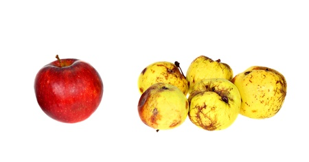 One good ripe red apple beside the group of ugly small rotten apples isolated on white background Stock Photo - 17335231
