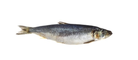Salted herring isolated on white background