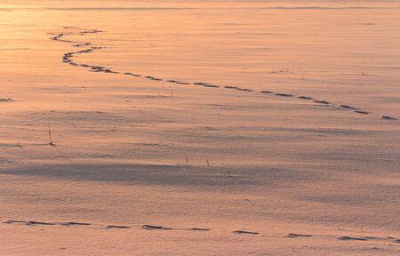 white winter: Footprints drawn on white snow in winter.