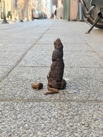 Dog Shit on Street Sidewalk / Excrement on Floor. Organic Object. Stock fotó