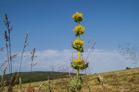 Yellow flower and landscape.