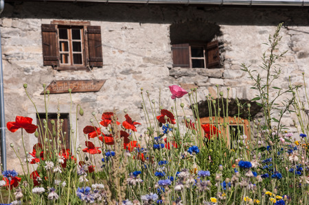 flowers,vallorcine,haute savoie,france Фото со стока - 85943770