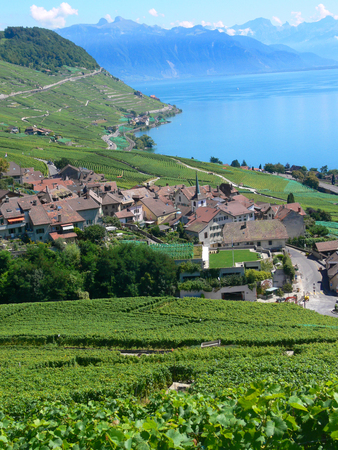 Terrace of Lavaux, Vaud, Swiss