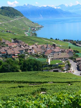 Terras van Lavaux, Vaud, Zwitserland Stockfoto