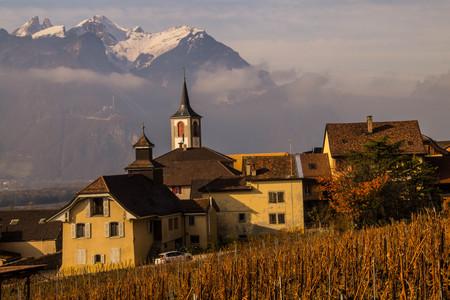 vineyard of lavaux