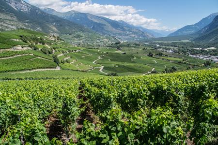 Salgesch, Valais, Swiss Stok Fotoğraf - 92709106