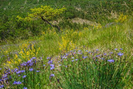 regional park the provencal baronies Фото со стока