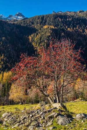 lavancher in chamonix in haute savoie in france Фото со стока