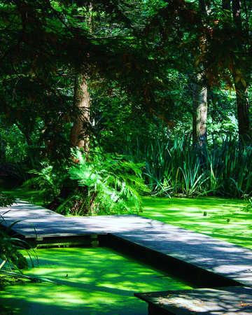 green botanic garden Stok Fotoğraf