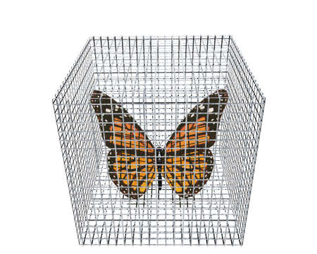 jailbird: butterfly in birdcage isolated on white background