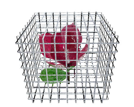 red rose in birdcage isolated on white Stock Photo - 3840335