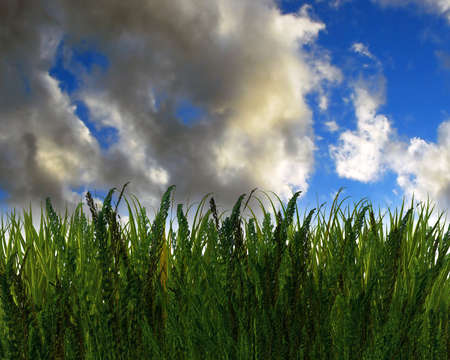 3D green grass and blue sky creative abstract background Stock Photo - 3840354