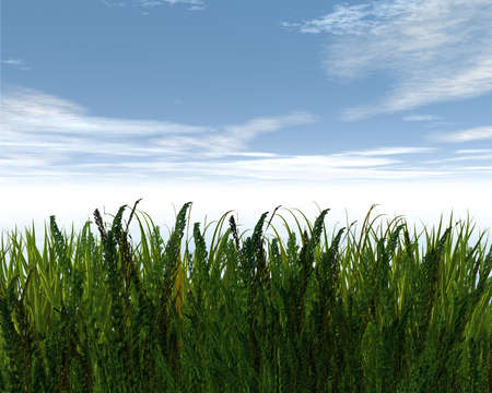 3D green grass and blue sky creative abstract background Stock Photo - 3840351