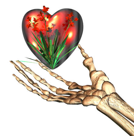 red 3D heart in bones hand Stock Photo - 3855557