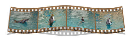 film with 4 images of the dolphins playing with toys  photo