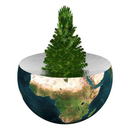 eastern europe: evergreen spruce on earth hemisphere isolated on a white