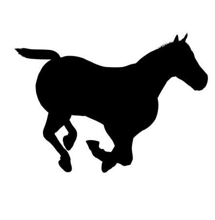 pozőr: gyönyörű ló