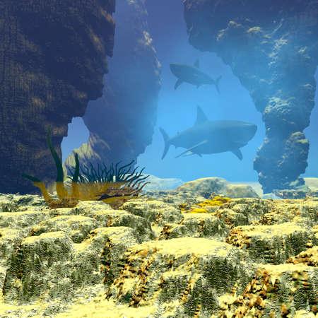 swimming shark underwater photo