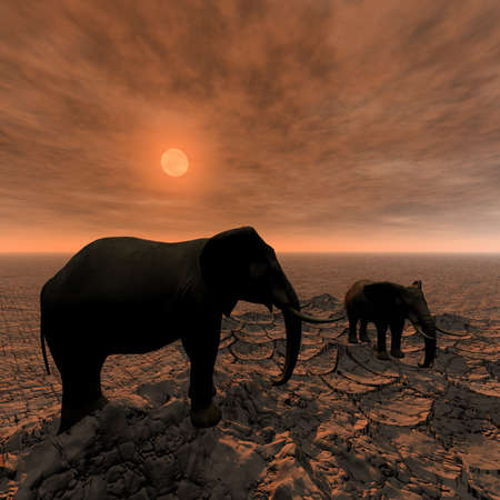 elephants in Africa landscape photo