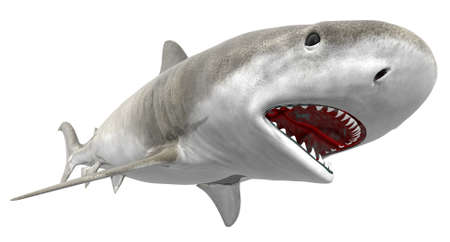 seawater: tiger shark isolated on a white background Stock Photo