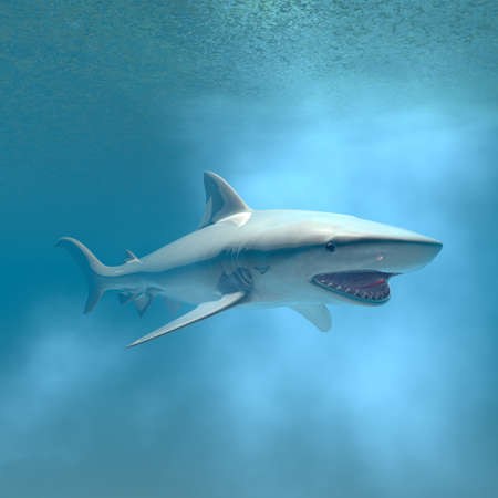 tiger shark swimming underwater computer 3d  render