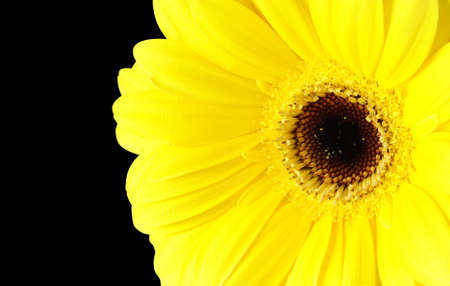 A bright yellow sunflower isolated on black background. photo