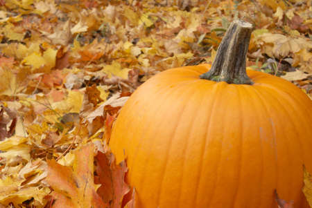 A fresh pumpkin sitting among the fallen leaves of autumn. Stock Photo - 5709864