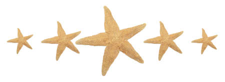 rating: Five starfish resemble a five star rating for either a hotel, movie, or something other.