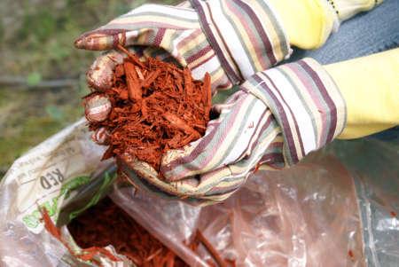 A gardener grabs a hand full of red mulch.
