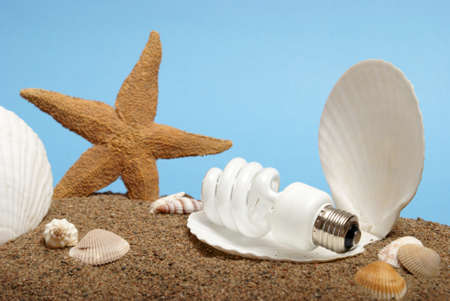 An economically friendly lightbulb rests inside a seashell to represent its new pearl like light it provides. photo