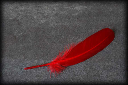 contrasting: An alone red feather rest on this contrasting background.