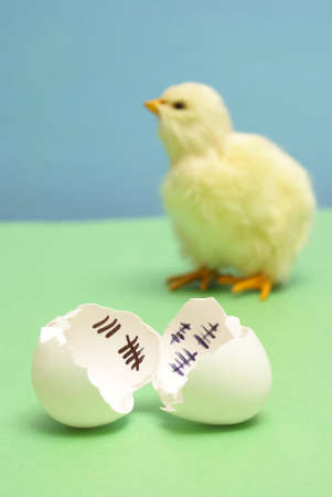 terms: A chick has been counting the days to his release as a hatchling. Stock Photo