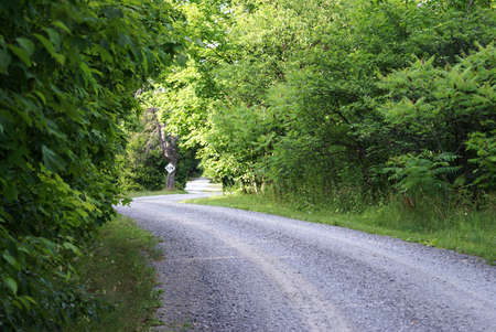 backroad: A quiet gavel backroad winding through the forest. Stock Photo