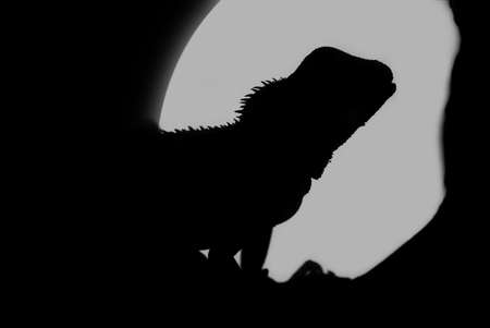 A closeup shot of a water dragons silhouette in the full moons light. photo