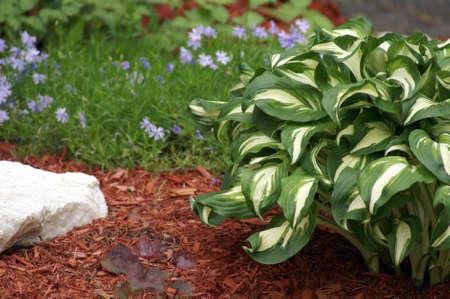 mulch: A closeup shot of a spring garden.