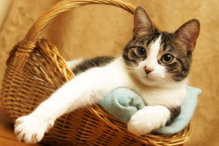 housecat: A housecat rests comfortably in a wicker basket.