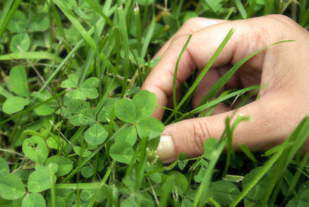 luckiness: A woman points out a four leaf clover in the patch. Stock Photo