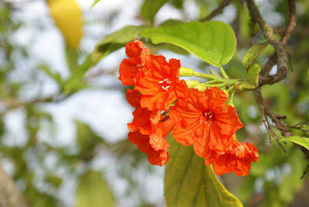 clima tropical: Un Hibiscus floración cerca de la costa en un clima tropical.