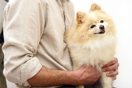 small dog: An owner holds on to his pet dog. Stock Photo