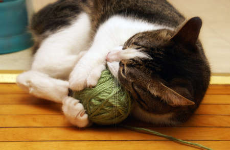 housecat: A domestic housecat plays with its ball of yarn.