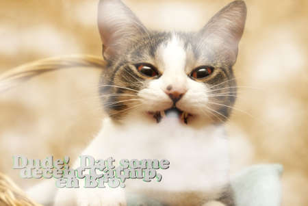 redeye: This kitty takes catnip to a whole new level.