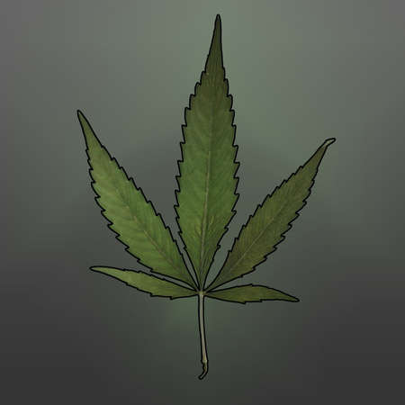 intoxicant: A square format image of a mature marijuana leaf set on a gradient background.