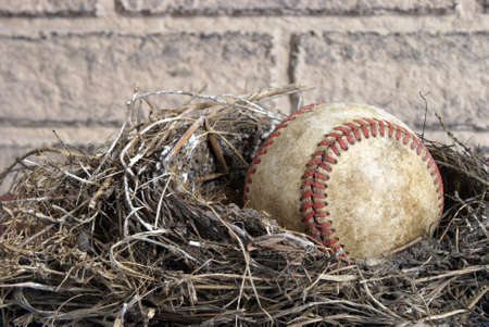 hardball: A miscellaneous concept that could represent a professional major leaguer being born or a pro baseball athlete being able to retire from the sport or anything that may be used in conjunction with the rare coming together of a hardball in a real birds nest