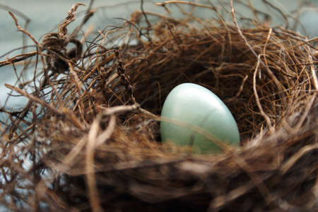 straw twig: A Robins nest in early springtime with her blue egg, shallow depth of field focus on the top part of the egg.