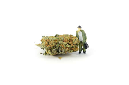 This is my bud a pun made with marijuana and a small figurine person both repesenting the bud. Imagens - 128903485