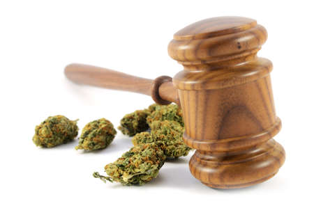 Conceptual image of legalized weed laws using a wooden gavel with some fresh marijuana isolated over a white background.